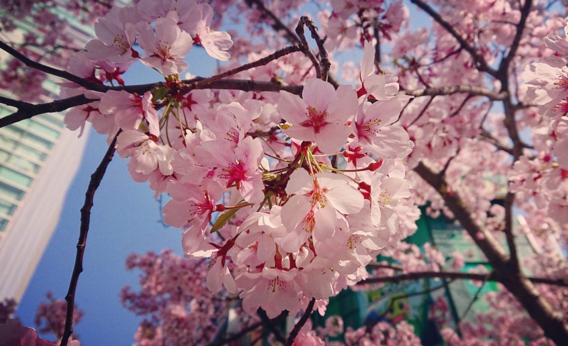 雪と桜|アルケミストレシピ|ビューティーマインドフルネス®︎